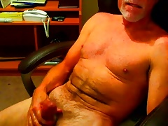 Silver dad grizzly  on
